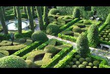 Garden / by Daniel Cronje