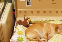 cama perrito