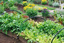 Fall Gardening / Share all things #fall #gardening!