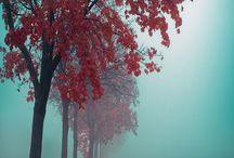 Δέντρα - μονοπάτια