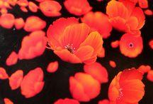 Red / Red Hill Gallery, Brisbane. redhillgallery.com.au