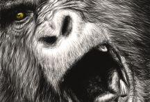 Gorila illustrations