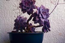 Flowers I saw