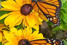 Gyönyörű természet / Minden, ami a gyönyörű természetben előfordul