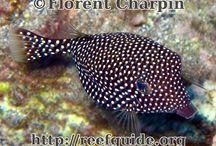 Fishes Mauritius