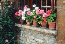 Flowered windows
