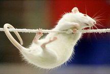 Plague the Rat | Oc by TrashRaccoon