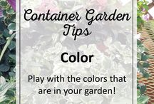 Designing Container Gardens like a Pro