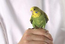 Feathered Facts & Fun / Avian photos and information.