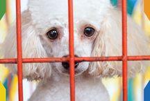 Adopción / Hay muchas mascotas esperando un hogar. Ayúdalas a encontrarlo.