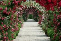 Flower gate / by Lola Wojo