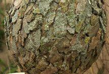 kulit pohon