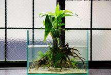 Wabi-kusa / Wabi-kusa to pochodząca z Japoni sztuka aranżacji kul z roślinami w szklanym naczyniu z wodą. Styl wypromował i stworzył Pan Takashi Amano. Wabi-kusa oznacza: wabi - prostota i kusa - trawa.