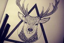 Stags / Deers