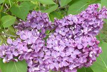 zdrowie z kwiatów