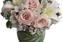 whites & creams / by Terrafolia Flowers
