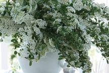 floral design and arrangements / flower arrangements