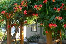 Kompozycje kwiatowe na podporach, pergolach