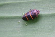 Gardening: Insect identification