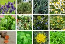 Natural gardening / Natural, eco friendly ways of gardening and healthy useful plants to grow.