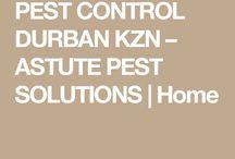 pest control. wood borer