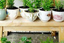 Go Green / DIY Gardening and Tips