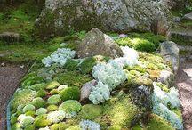 Moss garden -mușchi