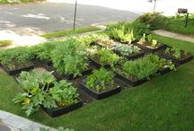 Ideas for our front/side yard! / by Colleen Marquez