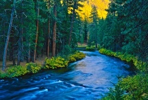 Metolius River/Camp Sherman / by Julie Turk-Franzen