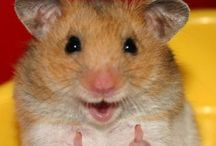 Hamster muito fofos.