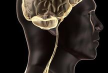 ALS kills nerve cells / A study that examines an overlooked area of research in ALS, or Lou Gehrig's disease, reveals a new way in which the devastating and incurable neurological condition kills nerve cells.