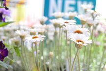 Meima's Daisy and Butterfly Garden / by Mel Crawf