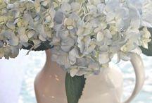 Hydrangea cut flowers stop them from wilting