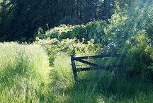 Rustic Meadow Wedding