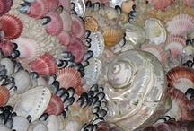 shell (κοχυλι)