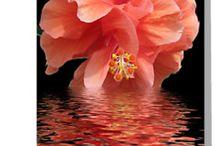 Estampas floral p/quadro.