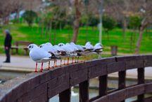 Tritsis Park / seagulls in Tritsis Park