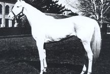 White Mutation 2 (W2) / This mutation was described in a paper published in 2007. The founder of the pattern is the Thoroughbred stallion KY Colonel (1946). The horses on this board are his descendants through his daughter White Beauty and are assumed to carry this mutation. Like the other families in the 2007 study, horses with W2 tend to be white or nearly white.