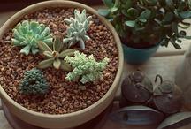 Plants My Cat Won't Eat