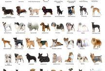 cães do mundo