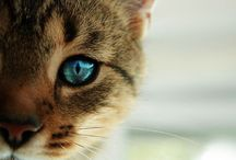Katzen - Cats / by Atlantisetta Zeit
