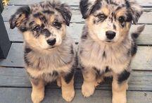 ♡Animals♡ / Imádoom az állatokaat!! Ti iis szeressétek és védjétek őkeet!!♡♡