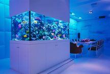 Akwaria/aquariums / Budujesz, remontujesz, meblujesz. Potrzebujesz wsparcia? W tym katalogu znajdziesz pomysły dla swojego wnętrza. Ja pomogę Ci zamienić je w projekt, razem zrealizujemy wnętrze które sobie wymarzysz.  Tu mnie znajdziesz: www.enplan.pl