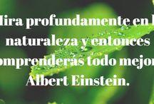 Frases Ambientales