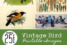 Vintage Bird Printable Images