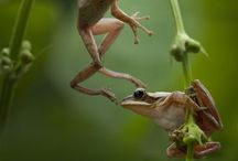 ANIMALS  FROGS / by GiGi