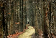 A path in the .........