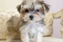 fur babies / adorable animals