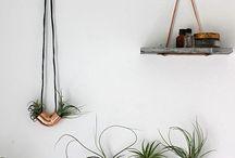 Plant Display Ideas