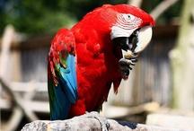 Fugle og dyr